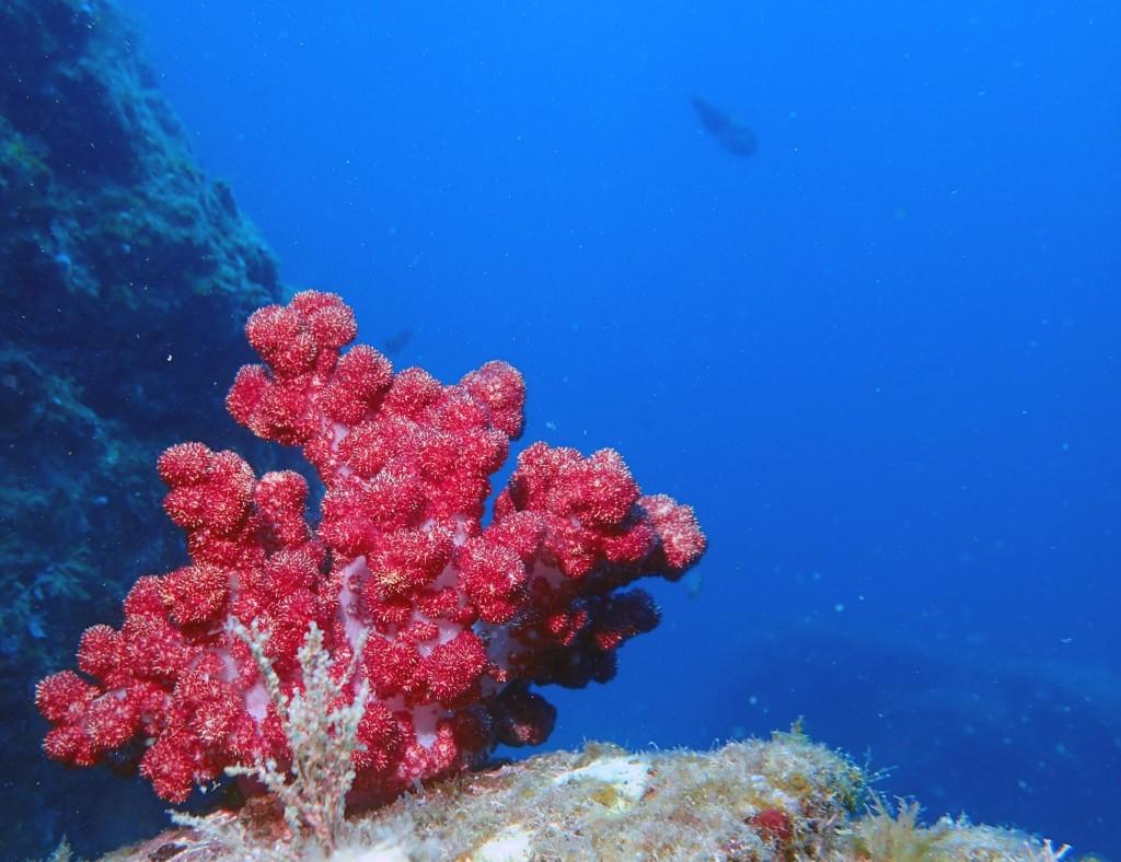3.「海のイチゴ」に見える